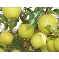 Голден Делішес (яблуко-груша)